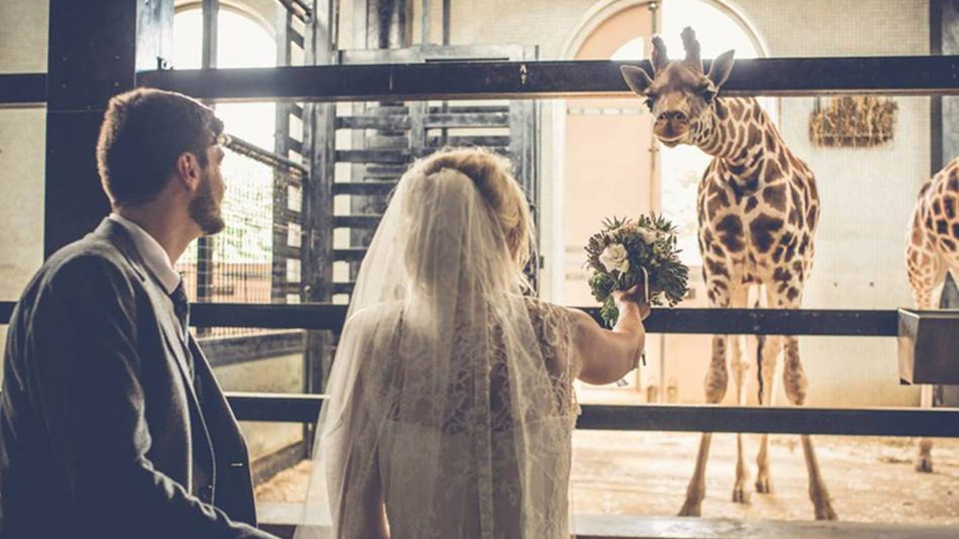 London-Zoo-autumn-wedding-giraffe-1